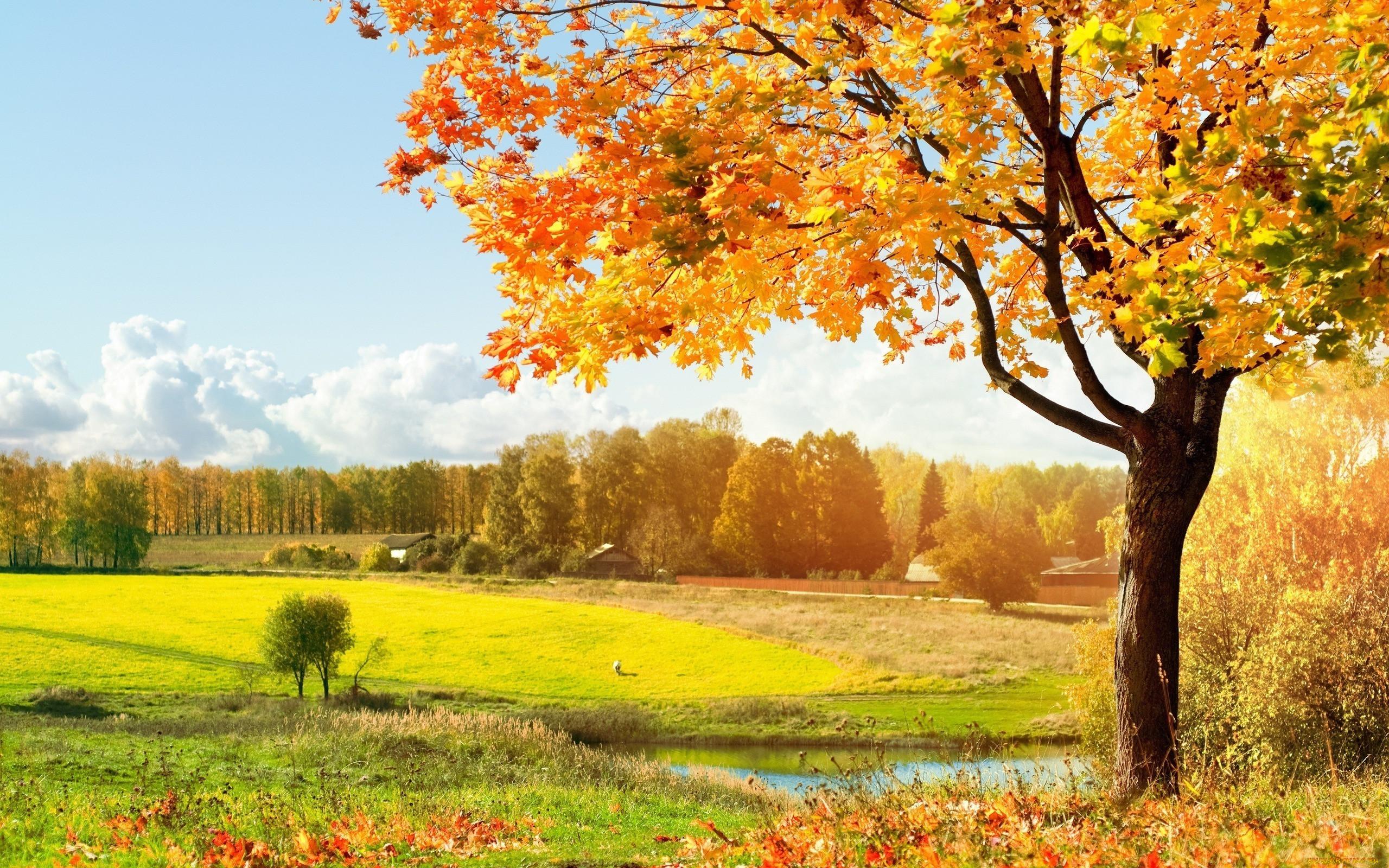 фото природа на рабочий стол осень отразить чувства